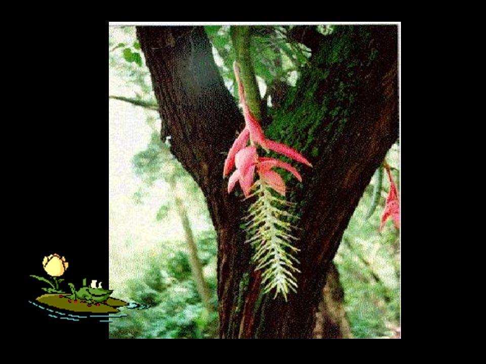 As plantas trepadeiras saem beneficiadas e não prejudicam e nem beneficiam aquelas plantas pelas quais trepam.