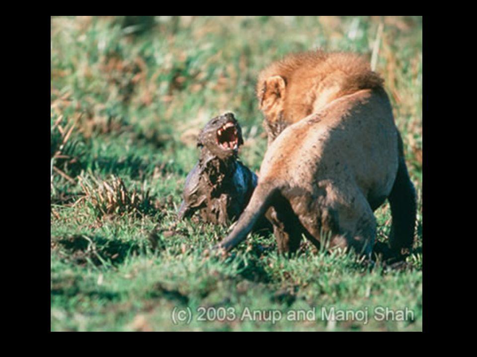 E será que seres de espécies diferentes se ajudam entre si?