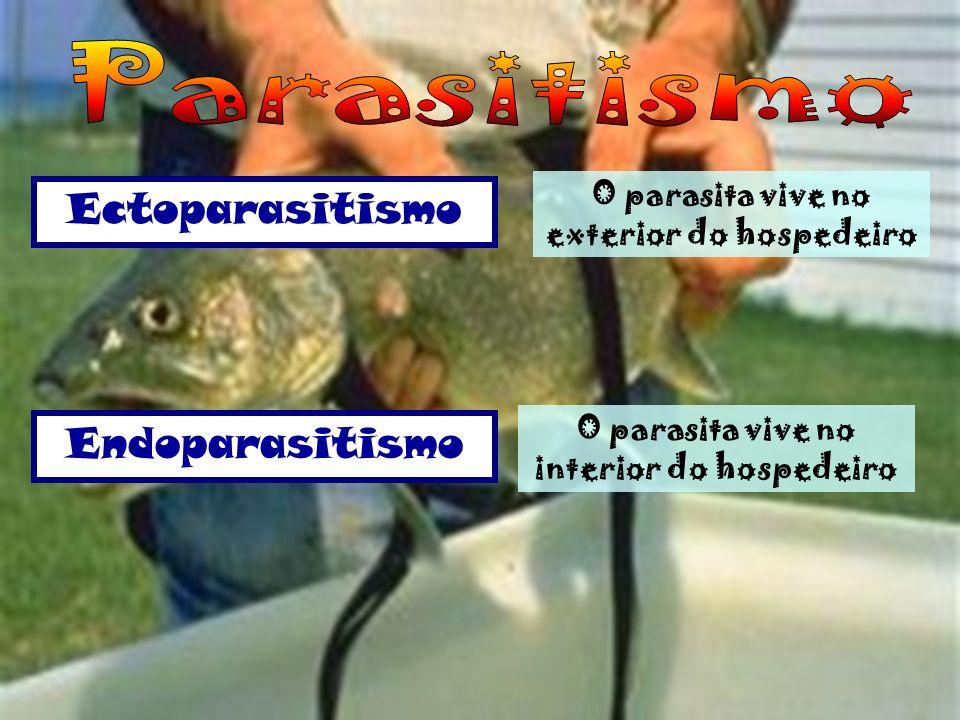 Uma espécie (parasita, +), vive às custas de outra (hospedeiro, - ), prejudicando-a mas não lhe causando morte imediata. Ex: Piolho e homem; Míldio e