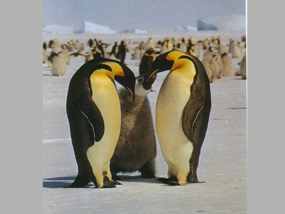 É uma interacção em que um indivíduo se alimenta de outro da mesma espécie. Ex: Fêmea louva-deus e viúva-negra devora macho após acasalamento Há benef