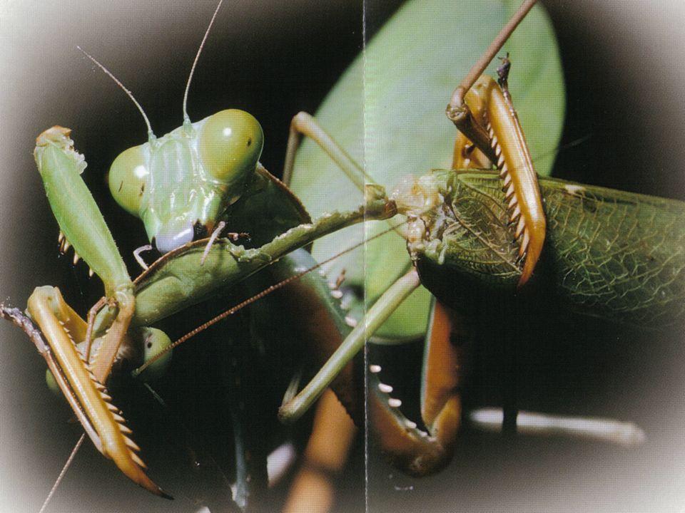 É uma interacção em que dois seres vivos da mesma espécie lutam entre si pelo mesmo objectivo (fêmea, território, alimento, etc). Ex: Veados lutam por
