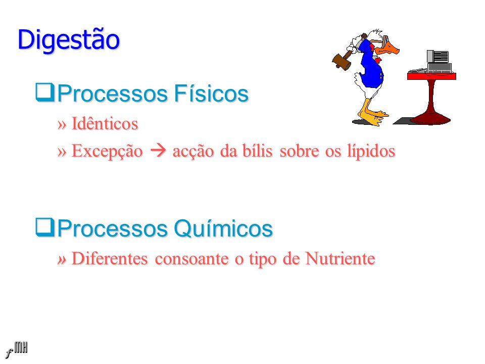 Processos Físicos » Idênticos » Excepção acção da bílis sobre os lípidos Processos Químicos » Diferentes consoante o tipo de Nutriente Digestão