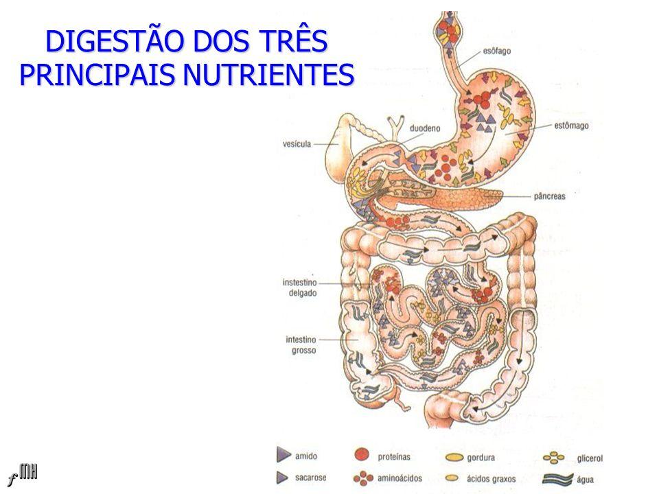 DIGESTÃO DOS TRÊS PRINCIPAIS NUTRIENTES
