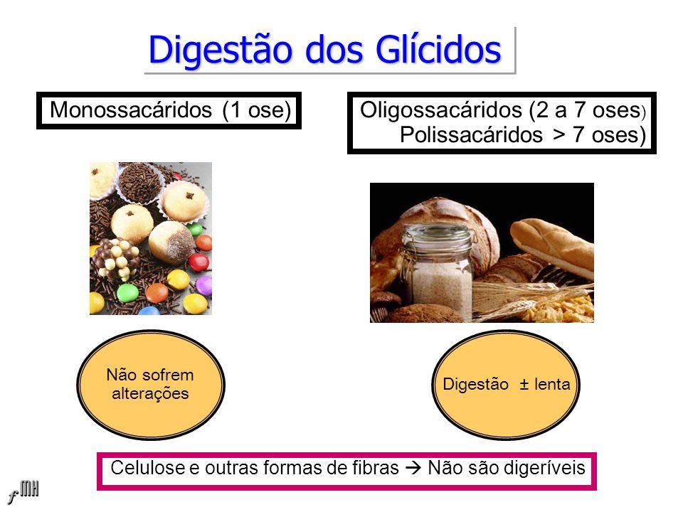 Digestão dos Glícidos Monossacáridos (1 ose) Celulose e outras formas de fibras Não são digeríveis Oligossacáridos (2 a 7 oses ) Polissacáridos > 7 oses) Não sofrem alterações Digestão ± lenta