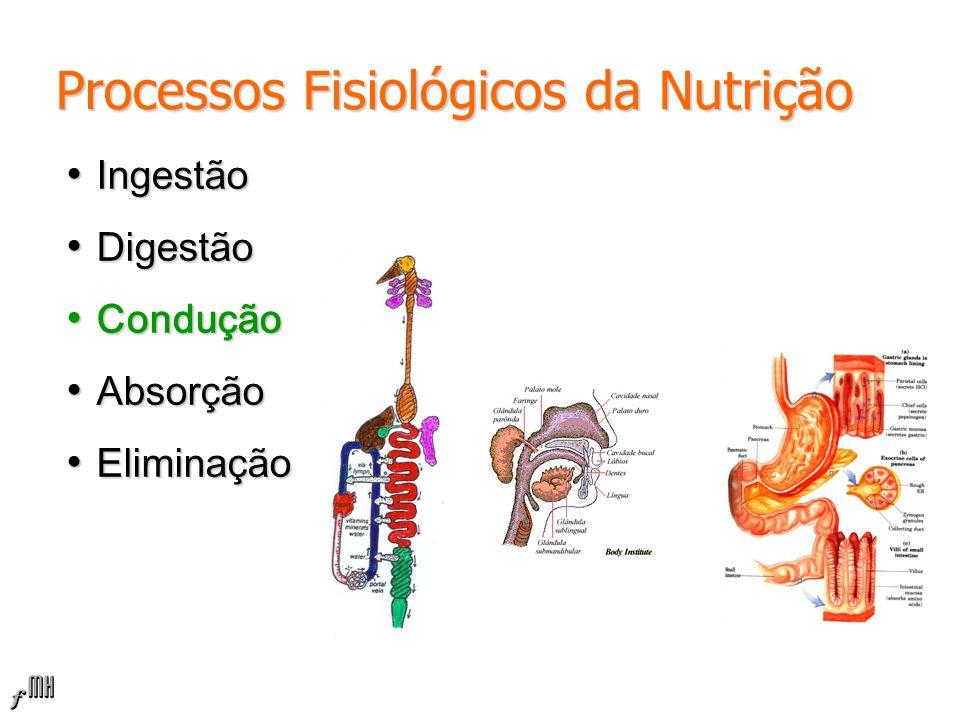 Processos Fisiológicos da Nutrição Ingestão Ingestão Digestão Digestão Condução Condução Absorção Absorção Eliminação Eliminação