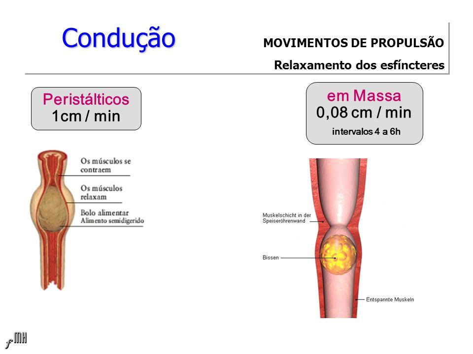 Condução Condução MOVIMENTOS DE PROPULSÃO Relaxamento dos esfíncteres Peristálticos 1cm / min em Massa 0,08 cm / min intervalos 4 a 6h