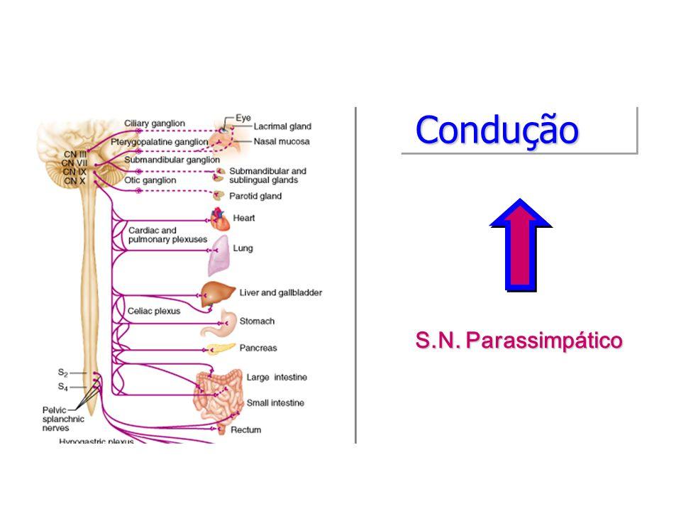 ConduçãoCondução S.N. Parassimpático