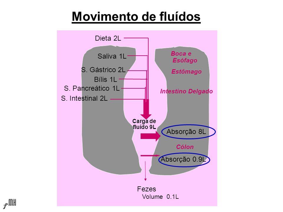 Movimento de fluídos Dieta 2L Saliva 1L S.Pancreático 1L Bílis 1L S.
