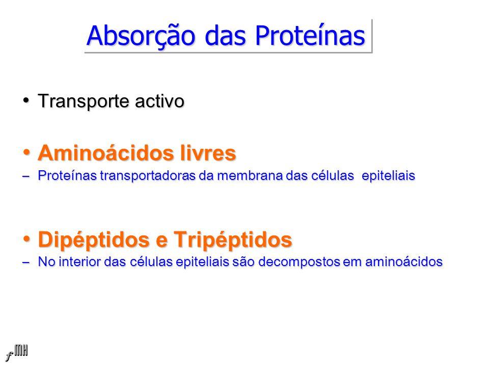 Absorção das Proteínas Transporte activo Transporte activo Aminoácidos livres Aminoácidos livres –Proteínas transportadoras da membrana das células epiteliais Dipéptidos e Tripéptidos Dipéptidos e Tripéptidos –No interior das células epiteliais são decompostos em aminoácidos