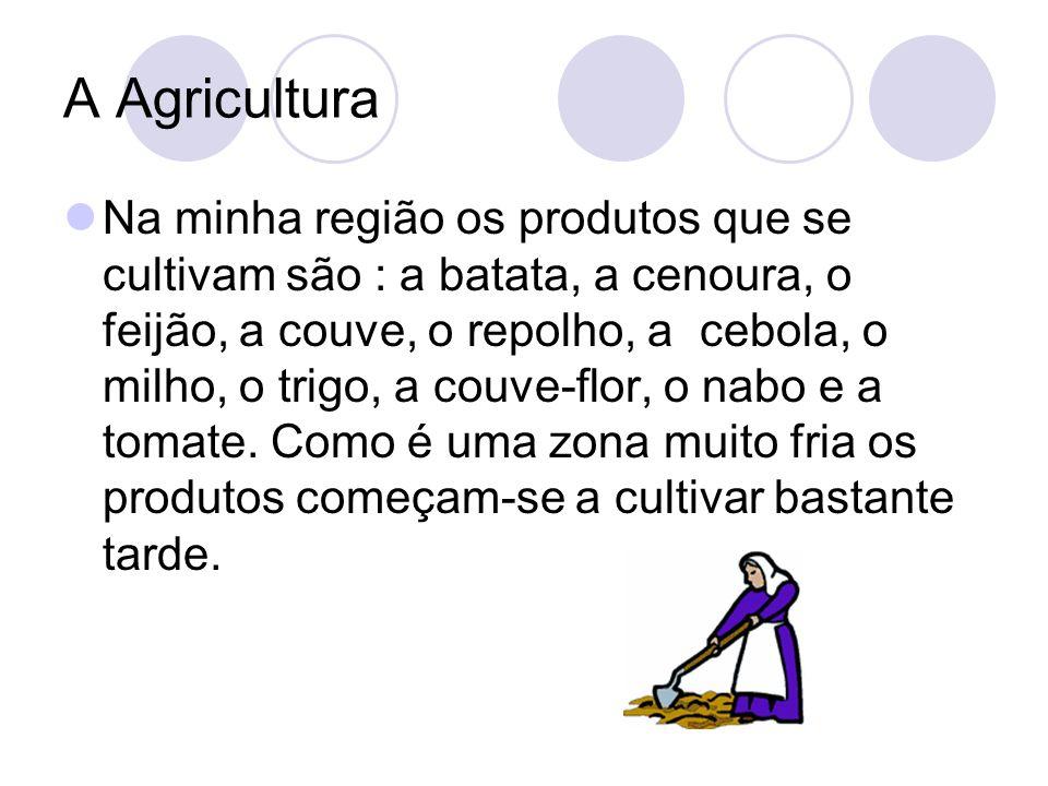 A Agricultura Na minha região os produtos que se cultivam são : a batata, a cenoura, o feijão, a couve, o repolho, a cebola, o milho, o trigo, a couve