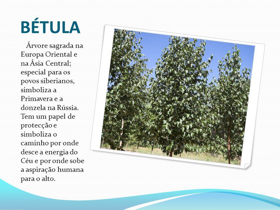 BÉTULA Árvore sagrada na Europa Oriental e na Ásia Central; especial para os povos siberianos, simboliza a Primavera e a donzela na Rússia. Tem um pap