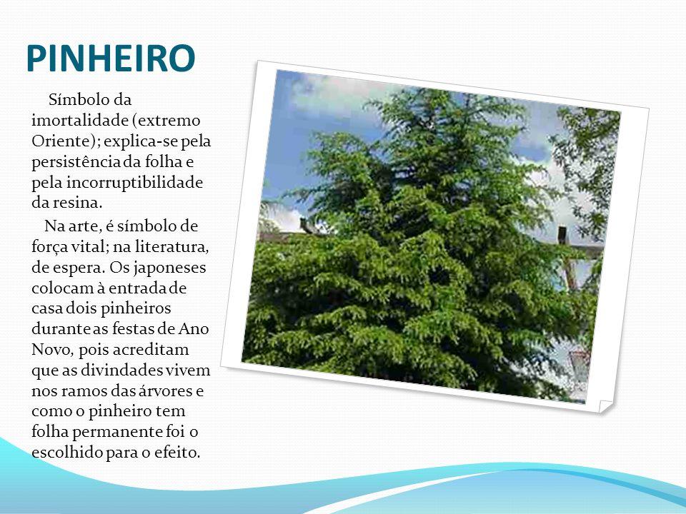PINHEIRO Símbolo da imortalidade (extremo Oriente); explica-se pela persistência da folha e pela incorruptibilidade da resina. Na arte, é símbolo de f