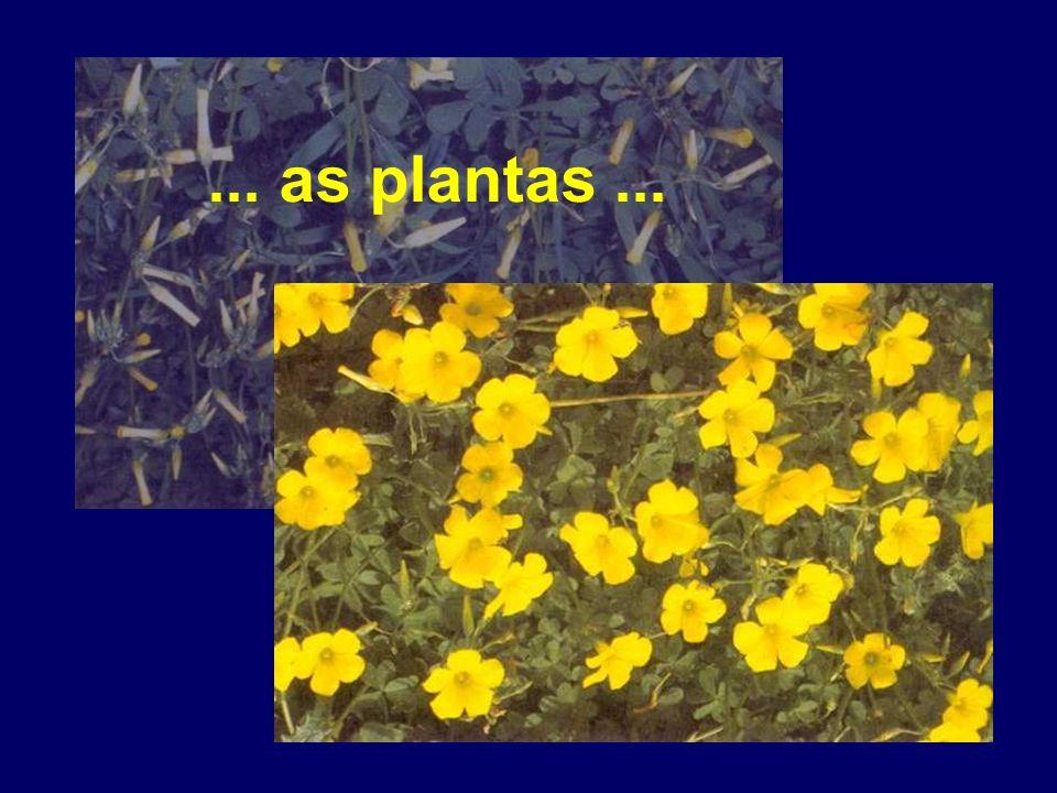 ... as plantas...