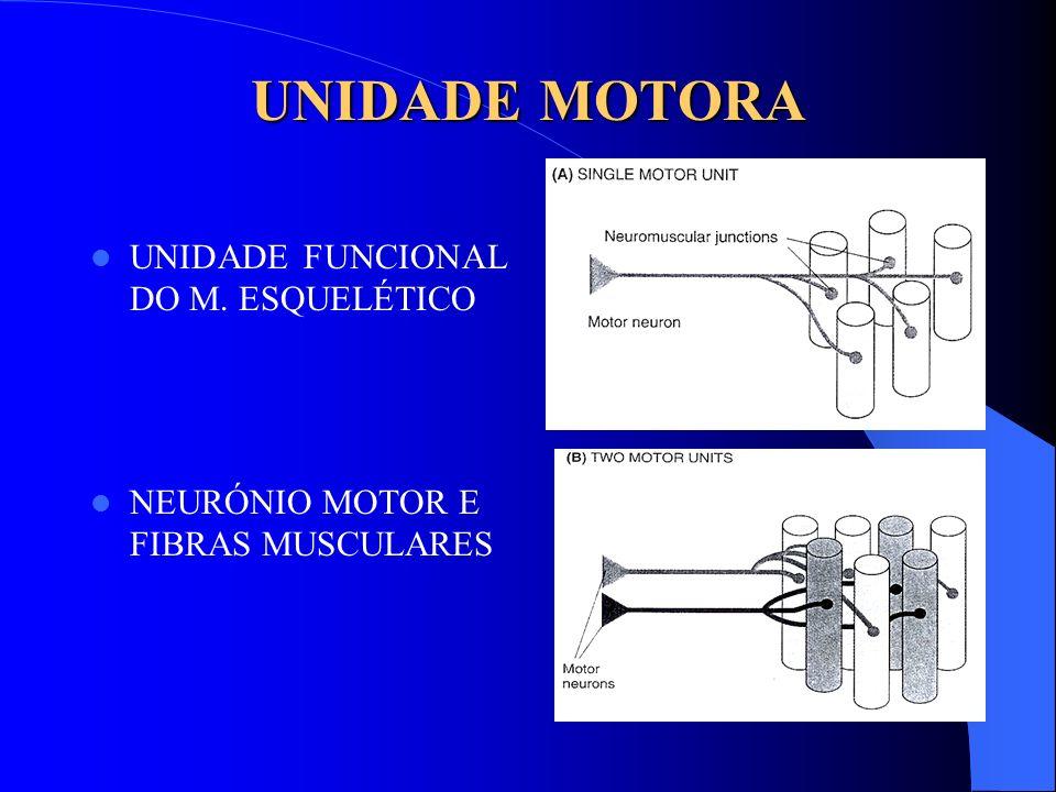 UNIDADE MOTORA UNIDADE FUNCIONAL DO M. ESQUELÉTICO NEURÓNIO MOTOR E FIBRAS MUSCULARES