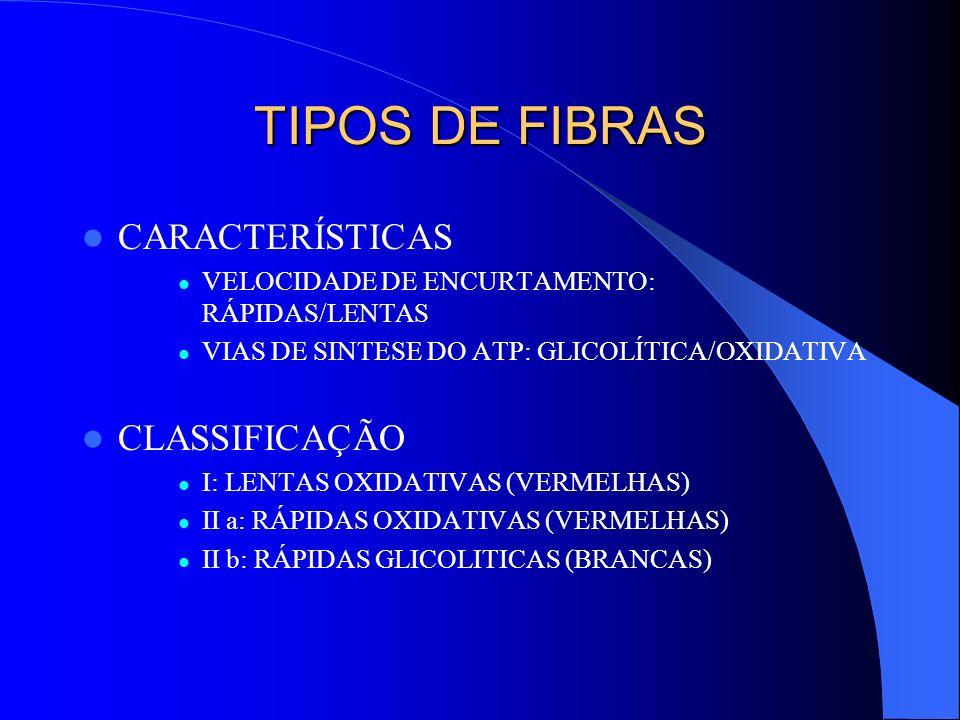 TIPOS DE FIBRAS CARACTERÍSTICAS VELOCIDADE DE ENCURTAMENTO: RÁPIDAS/LENTAS VIAS DE SINTESE DO ATP: GLICOLÍTICA/OXIDATIVA CLASSIFICAÇÃO I: LENTAS OXIDA