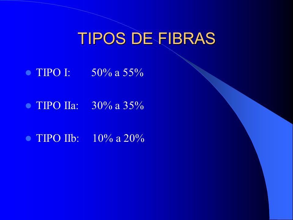 TIPOS DE FIBRAS TIPO I: 50% a 55% TIPO IIa: 30% a 35% TIPO IIb: 10% a 20%