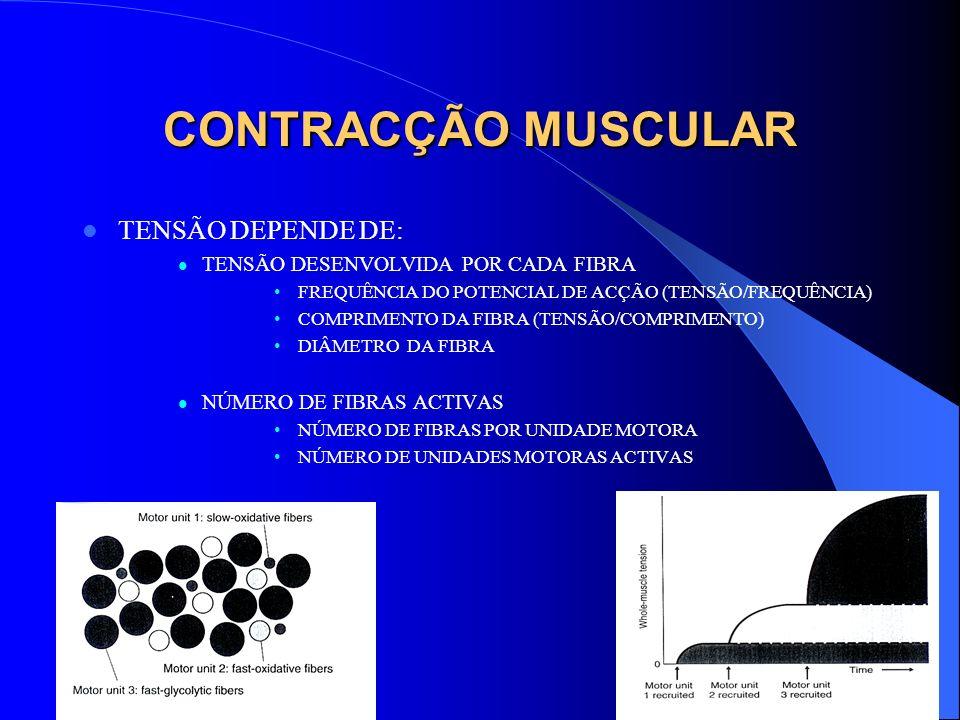 CONTRACÇÃO MUSCULAR TENSÃO DEPENDE DE: TENSÃO DESENVOLVIDA POR CADA FIBRA FREQUÊNCIA DO POTENCIAL DE ACÇÃO (TENSÃO/FREQUÊNCIA) COMPRIMENTO DA FIBRA (T