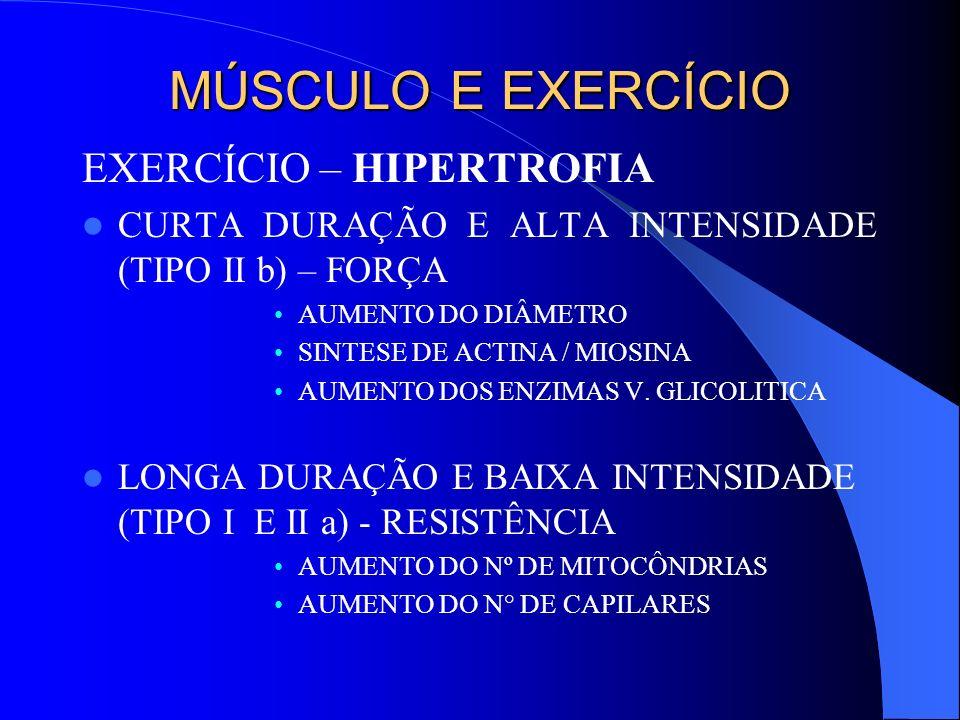 MÚSCULO E EXERCÍCIO EXERCÍCIO – HIPERTROFIA CURTA DURAÇÃO E ALTA INTENSIDADE (TIPO II b) – FORÇA AUMENTO DO DIÂMETRO SINTESE DE ACTINA / MIOSINA AUMEN