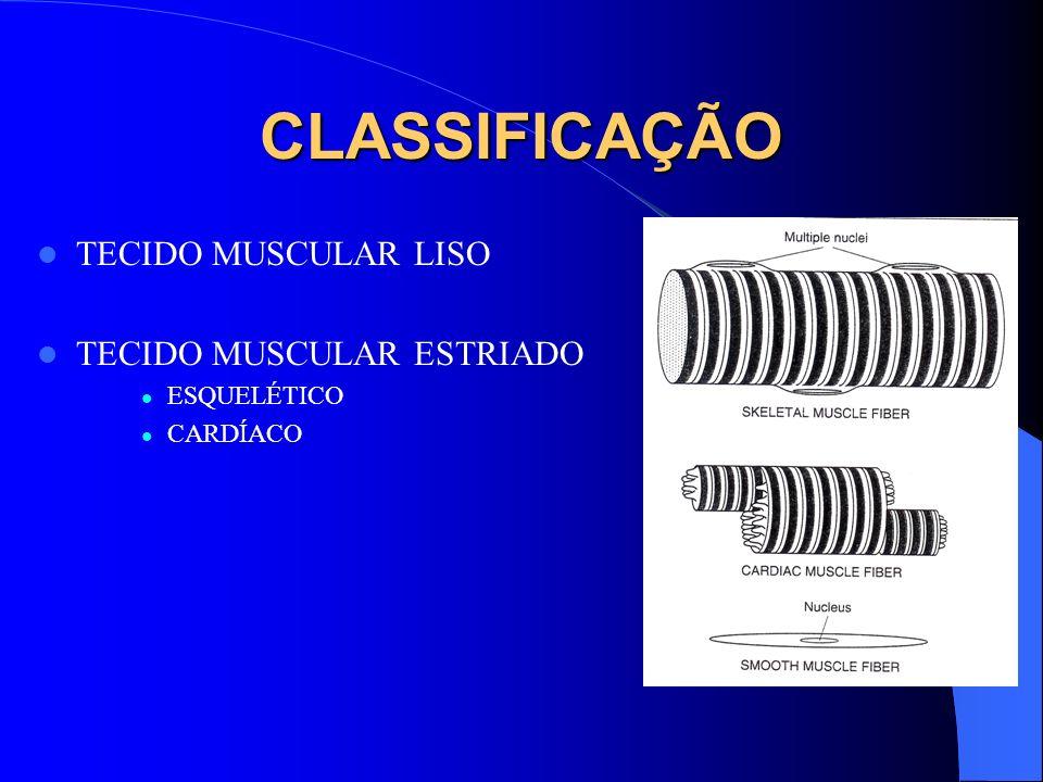 CLASSIFICAÇÃO TECIDO MUSCULAR LISO TECIDO MUSCULAR ESTRIADO ESQUELÉTICO CARDÍACO