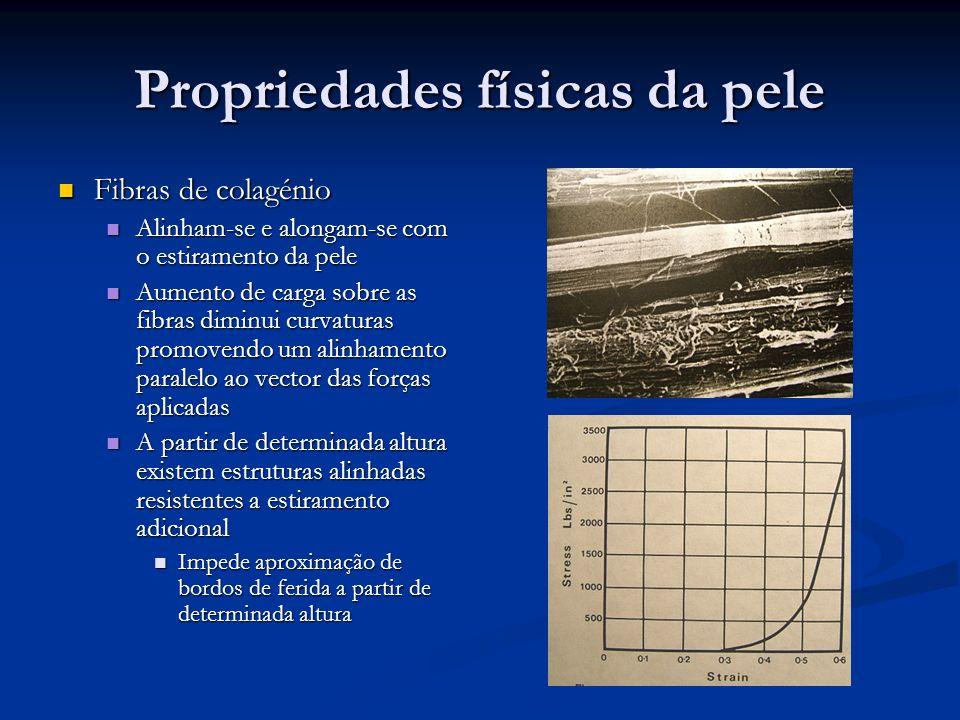 Propriedades físicas da pele Fibras de colagénio Fibras de colagénio Fibras de colagénio são mais finas perto da epiderme Fibras de colagénio são mais finas perto da epiderme Provavelmente funcionando como factor de amortecimento e protecção das células epiteliais Provavelmente funcionando como factor de amortecimento e protecção das células epiteliais