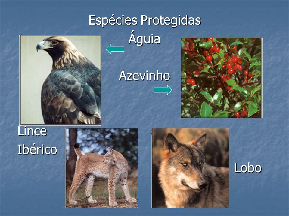 Espécies Protegidas ÁguiaAzevinhoLinceIbérico Lobo Lobo