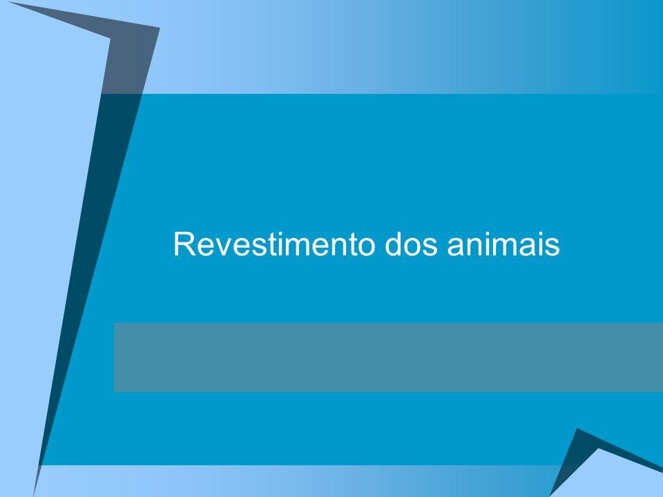 Revestimento do corpo dos animais Tipos de revestimento: Cutícula Quitina Animais Invertebrados Carapaças calcárias Nua Pele Escamas – dérmicas Animais Escamas – epidérmicas Vertebrados Penas Pêlos