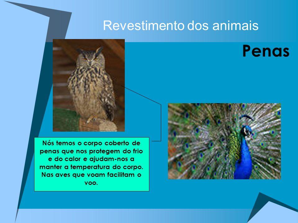 Revestimento dos animais Penas Nós temos o corpo coberto de penas que nos protegem do frio e do calor e ajudam-nos a manter a temperatura do corpo. Na