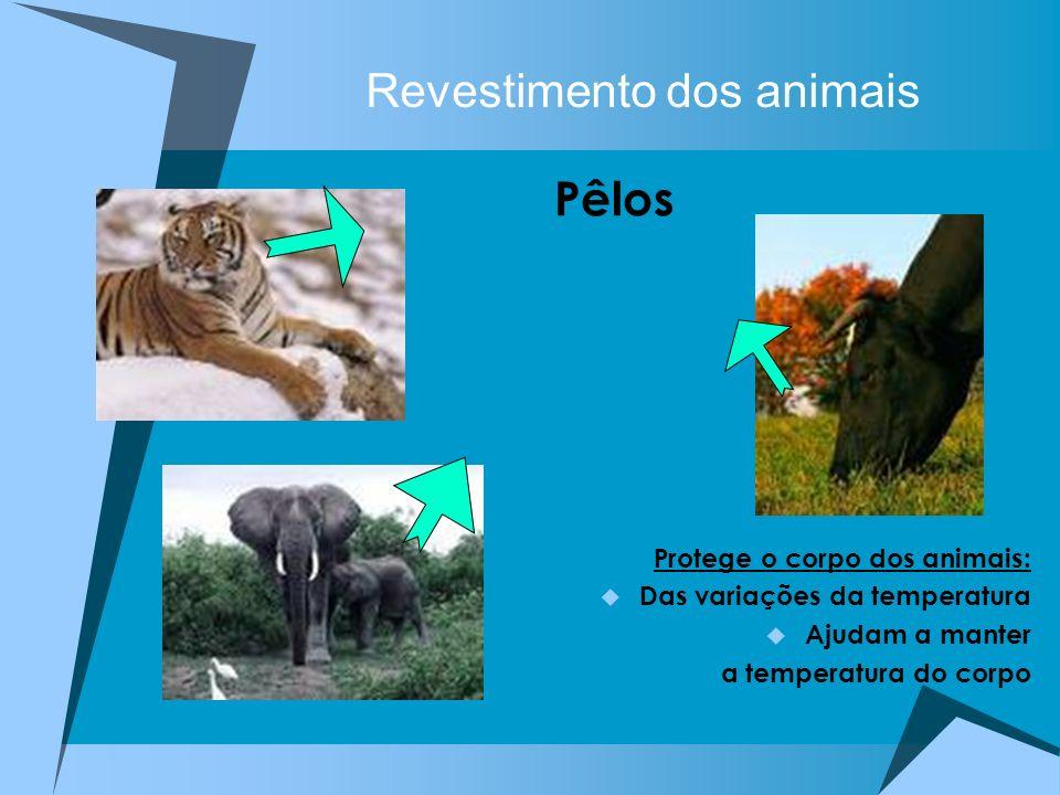 Revestimento dos animais Pêlos Protege o corpo dos animais: Das variações da temperatura Ajudam a manter a temperatura do corpo