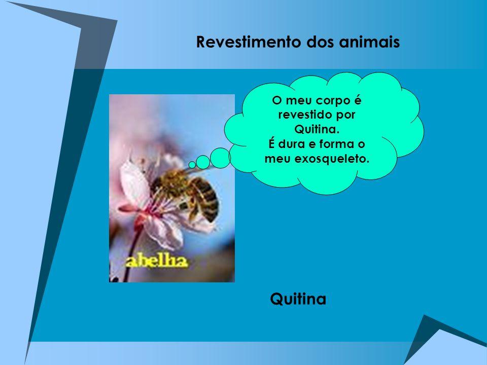 Revestimento dos animais Quitina O meu corpo é revestido por Quitina. É dura e forma o meu exosqueleto.
