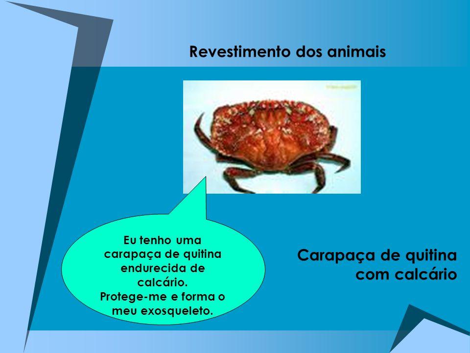 Revestimento dos animais Concha calcária Placas calcárias Espinhos calcários