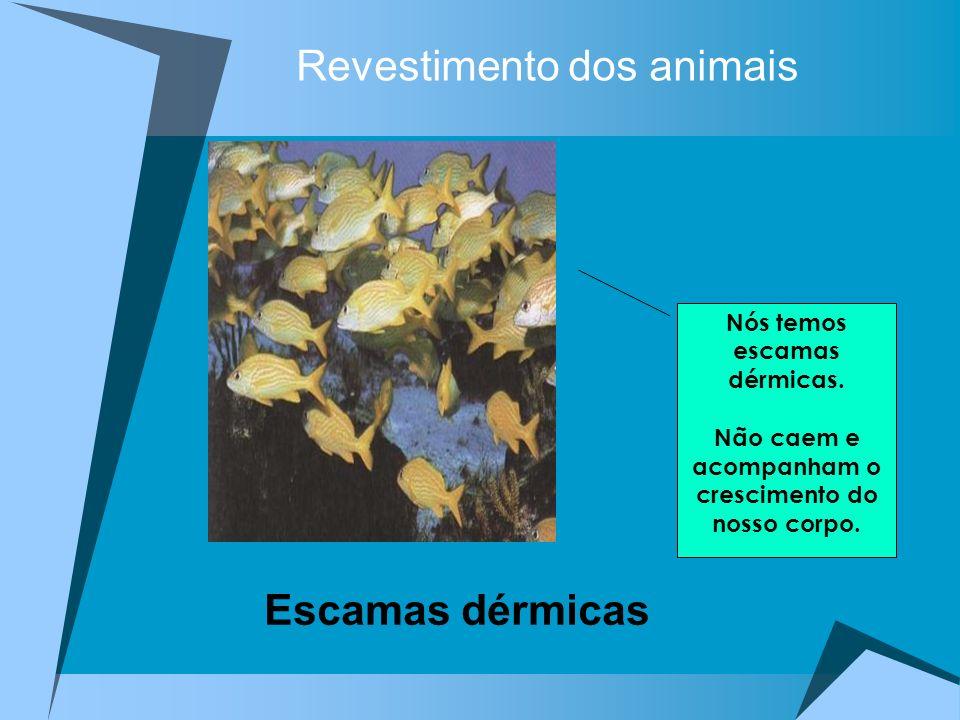 Revestimento dos animais Nós temos escamas dérmicas. Não caem e acompanham o crescimento do nosso corpo. Escamas dérmicas