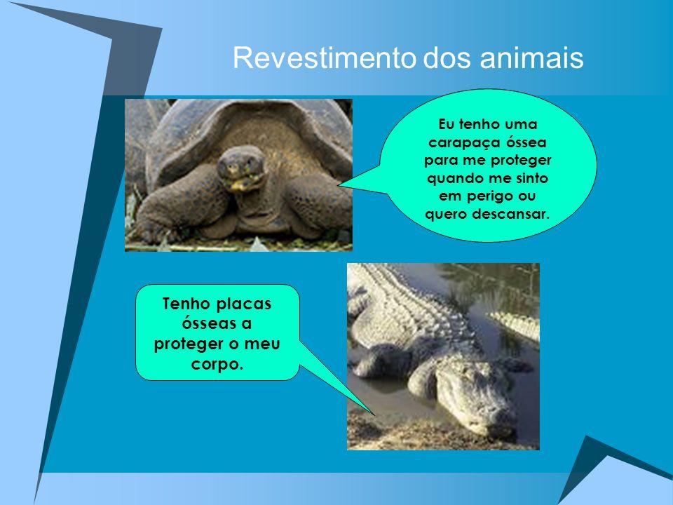 Revestimento dos animais Eu tenho uma carapaça óssea para me proteger quando me sinto em perigo ou quero descansar. Tenho placas ósseas a proteger o m
