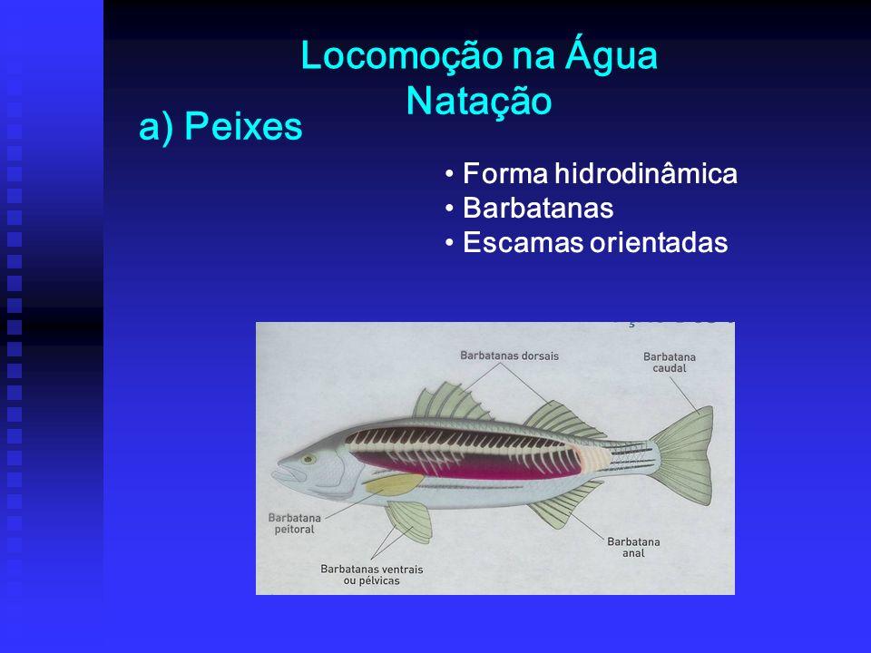 Locomoção na Água Forma hidrodinâmica Barbatanas Escamas orientadas Natação a) Peixes