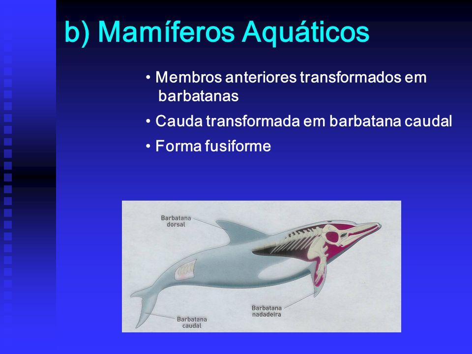 b) Mamíferos Aquáticos Membros anteriores transformados em barbatanas Cauda transformada em barbatana caudal Forma fusiforme