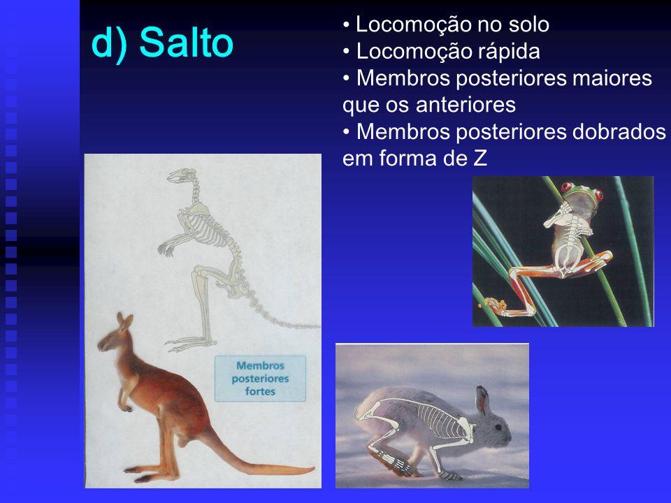 d) Salto Locomoção no solo Locomoção rápida Membros posteriores maiores que os anteriores Membros posteriores dobrados em forma de Z