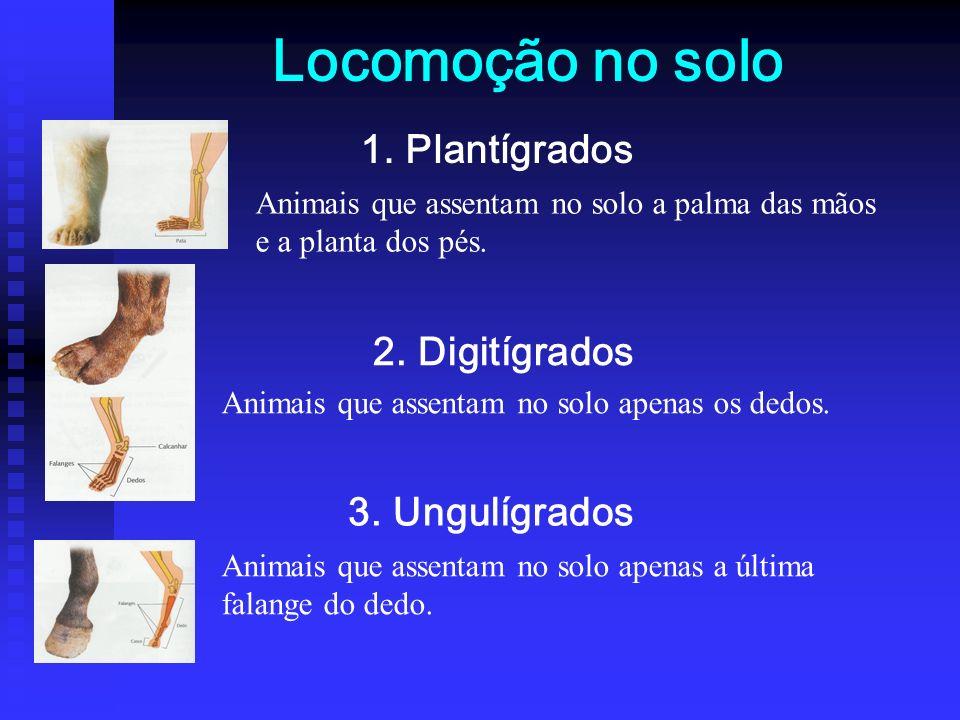 Locomoção no solo 1.Plantígrados 2. Digitígrados 3.