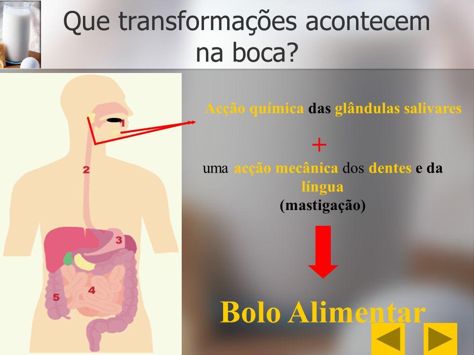 Que transformações acontecem na boca? Acção química das glândulas salivares + uma acção mecânica dos dentes e da língua (mastigação) Bolo Alimentar