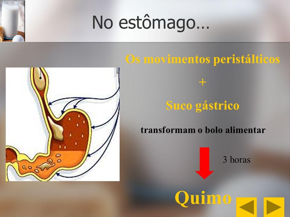 No estômago… Os movimentos peristálticos + Suco gástrico Quimo transformam o bolo alimentar 3 horas