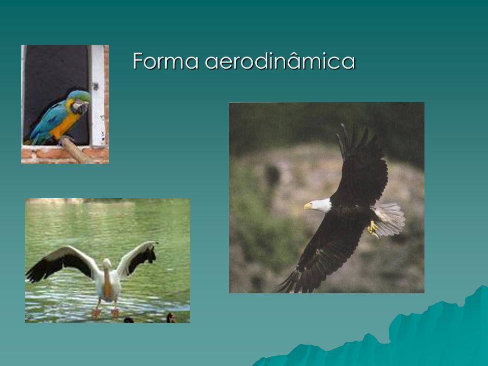Forma aerodinâmica