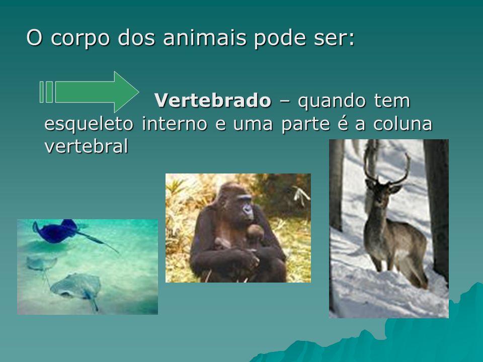 O corpo dos animais pode ser: Vertebrado – quando tem esqueleto interno e uma parte é a coluna vertebral Vertebrado – quando tem esqueleto interno e uma parte é a coluna vertebral
