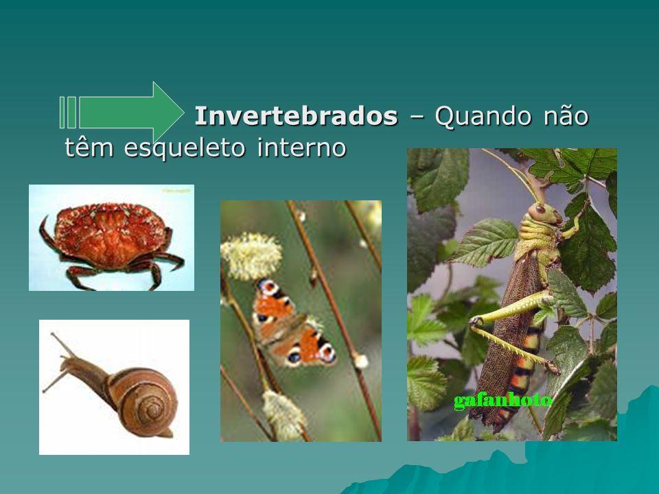 Invertebrados – Quando não têm esqueleto interno Invertebrados – Quando não têm esqueleto interno