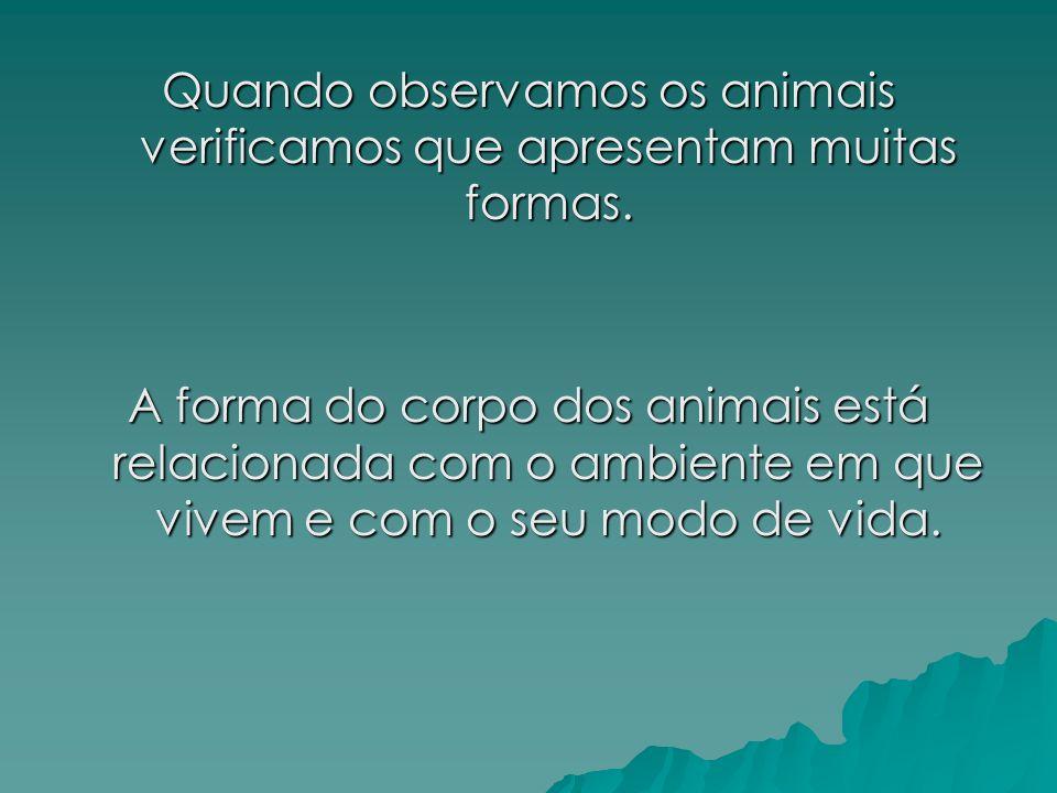 Quando observamos os animais verificamos que apresentam muitas formas.