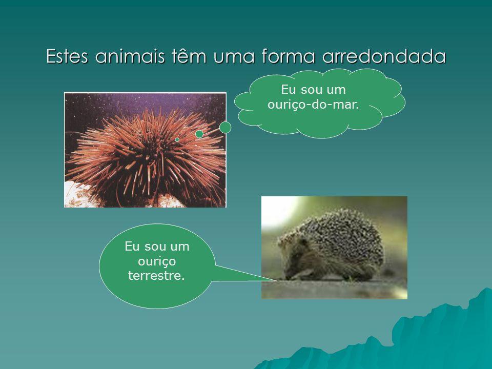 Estes animais têm uma forma arredondada Eu sou um ouriço terrestre. Eu sou um ouriço-do-mar.