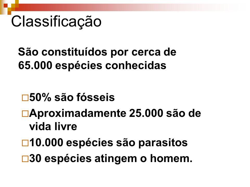 Classificação São constituídos por cerca de 65.000 espécies conhecidas 50% são fósseis Aproximadamente 25.000 são de vida livre 10.000 espécies são parasitos 30 espécies atingem o homem.