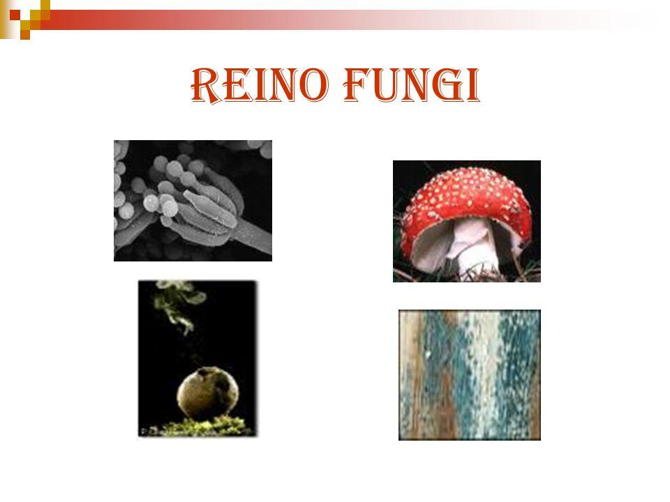 Tipos de Plasmodium Plasmodium vivax (Terçã benigna) Plasmodium falciparum (Terçã maligna) Plasmodium malariae (Quartã) Plasmodium ovale (Não identificado no Brasil)