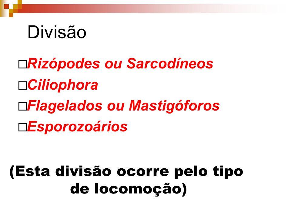 Divisão Rizópodes ou Sarcodíneos Ciliophora Flagelados ou Mastigóforos Esporozoários (Esta divisão ocorre pelo tipo de locomoção)