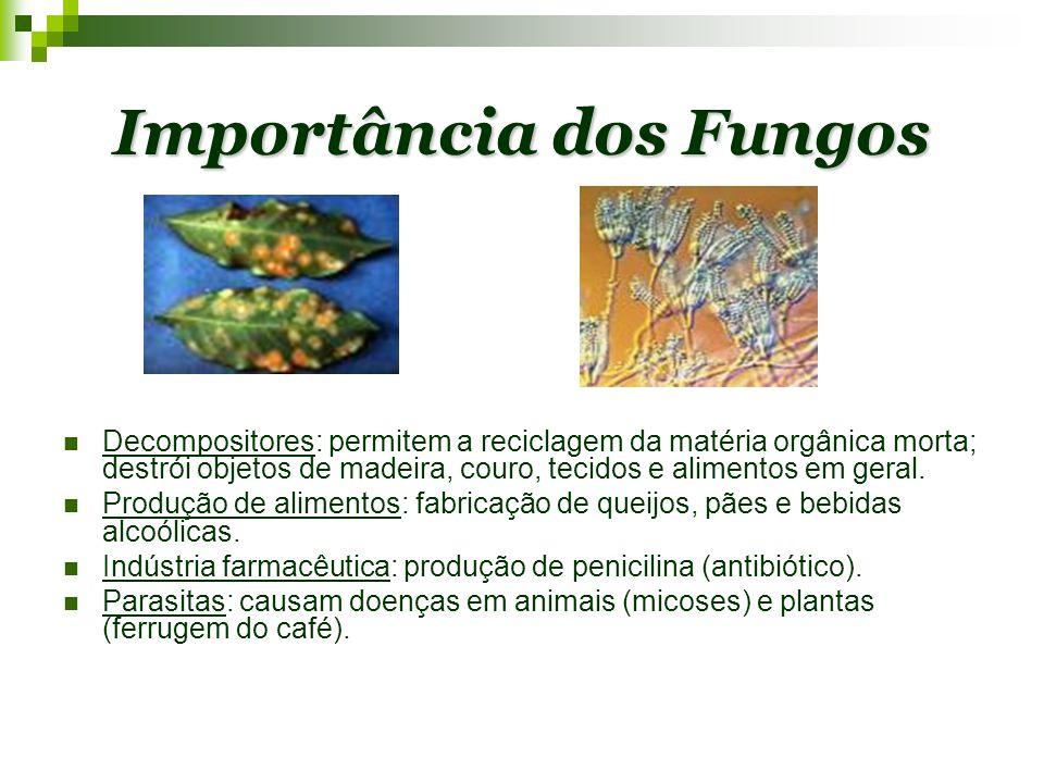 Características Gerais Seres uni ou pluricelulares, sem tecidos verdadeiros.