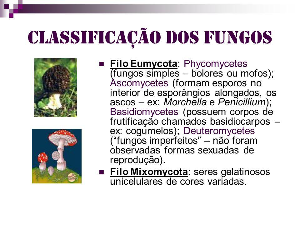 Importância dos Fungos