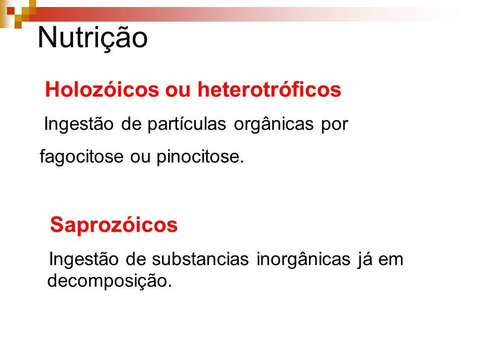 Nutrição Holozóicos ou heterotróficos Ingestão de partículas orgânicas por fagocitose ou pinocitose.