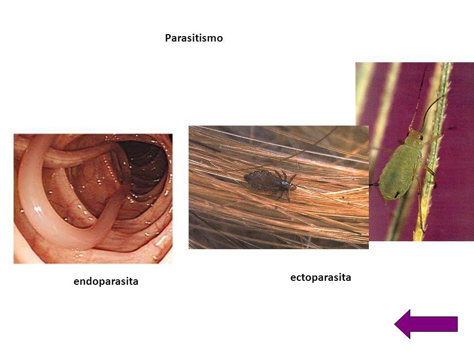 Parasitismo ectoparasita endoparasita